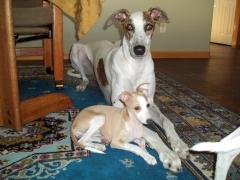 Manny Kartouche' & Nina Sophia, puppy