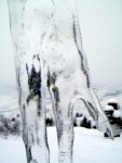 Even the icicles havesicles