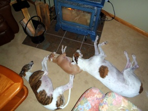 3 Dog Night by the Stove