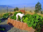 Best garden helper ever –Mandy