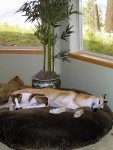 Two hounds chillin'