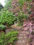 Mature garden space