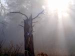 Crepuscular rays illuminating deerskull