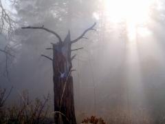 Crepuscular rays illuminating deer skull