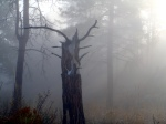 Fog illuminating snag with deerskull