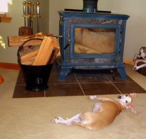 Iggy basking