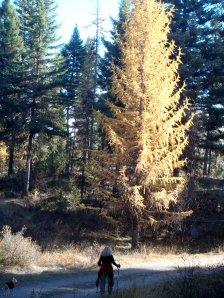 Okanogan Forest