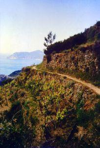 Crumbling goat trail along Cinque Terre.