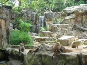Baboon enclosure