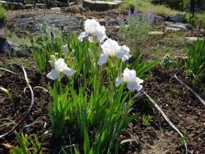 Luminous whites