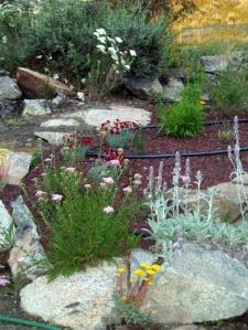 July's summer garden