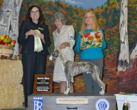 Bodhi Wins Big at AKC 2015