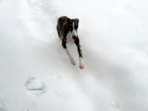 Snow hound