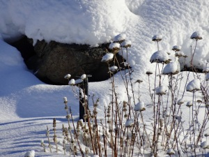 Snow tufted winter garden