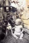 Springer spaniel Pete & me